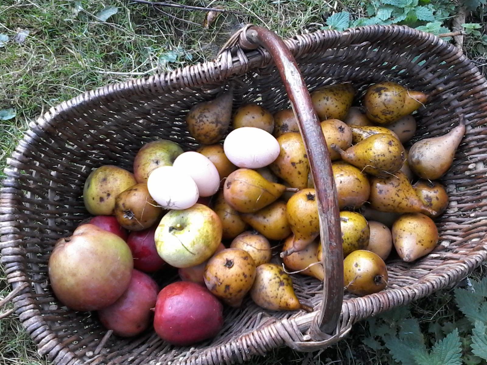 pommes-poires-oeufs