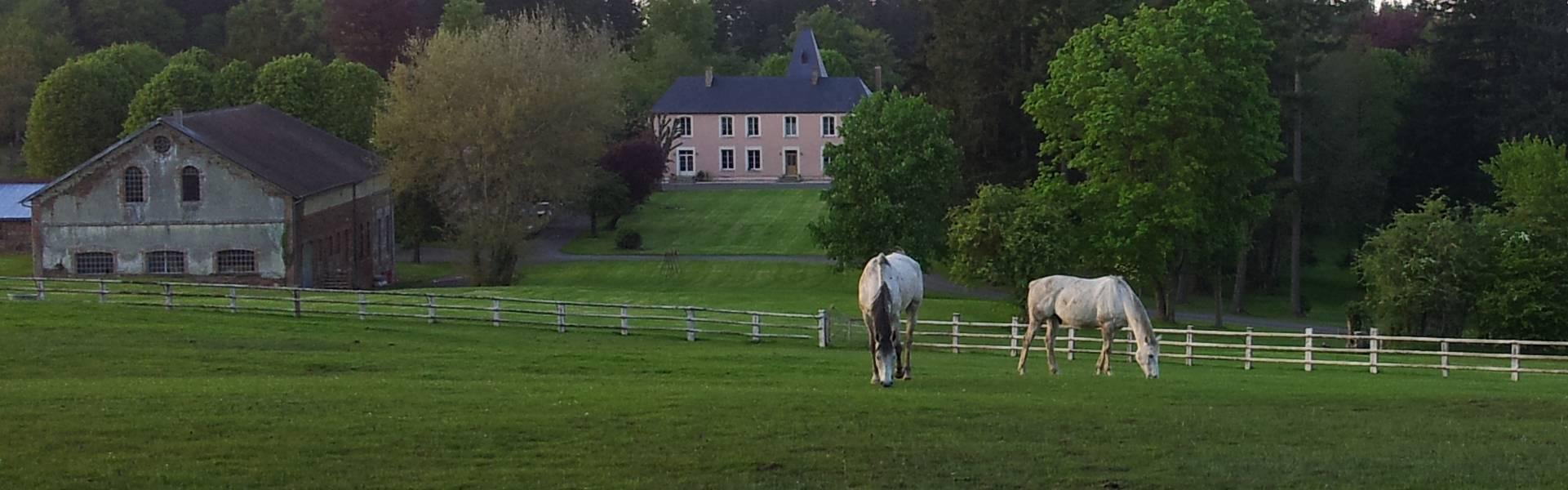 vdg_paarden1