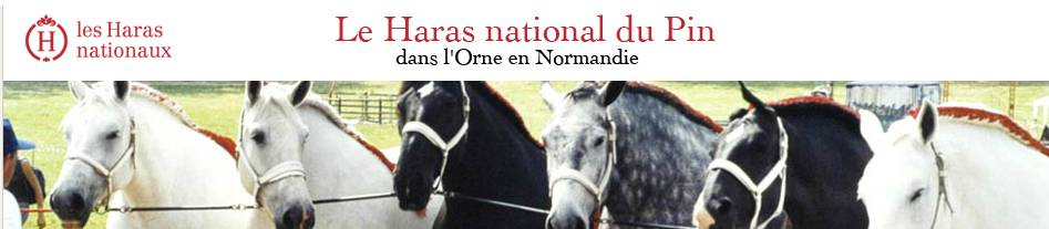 le haras national du pin