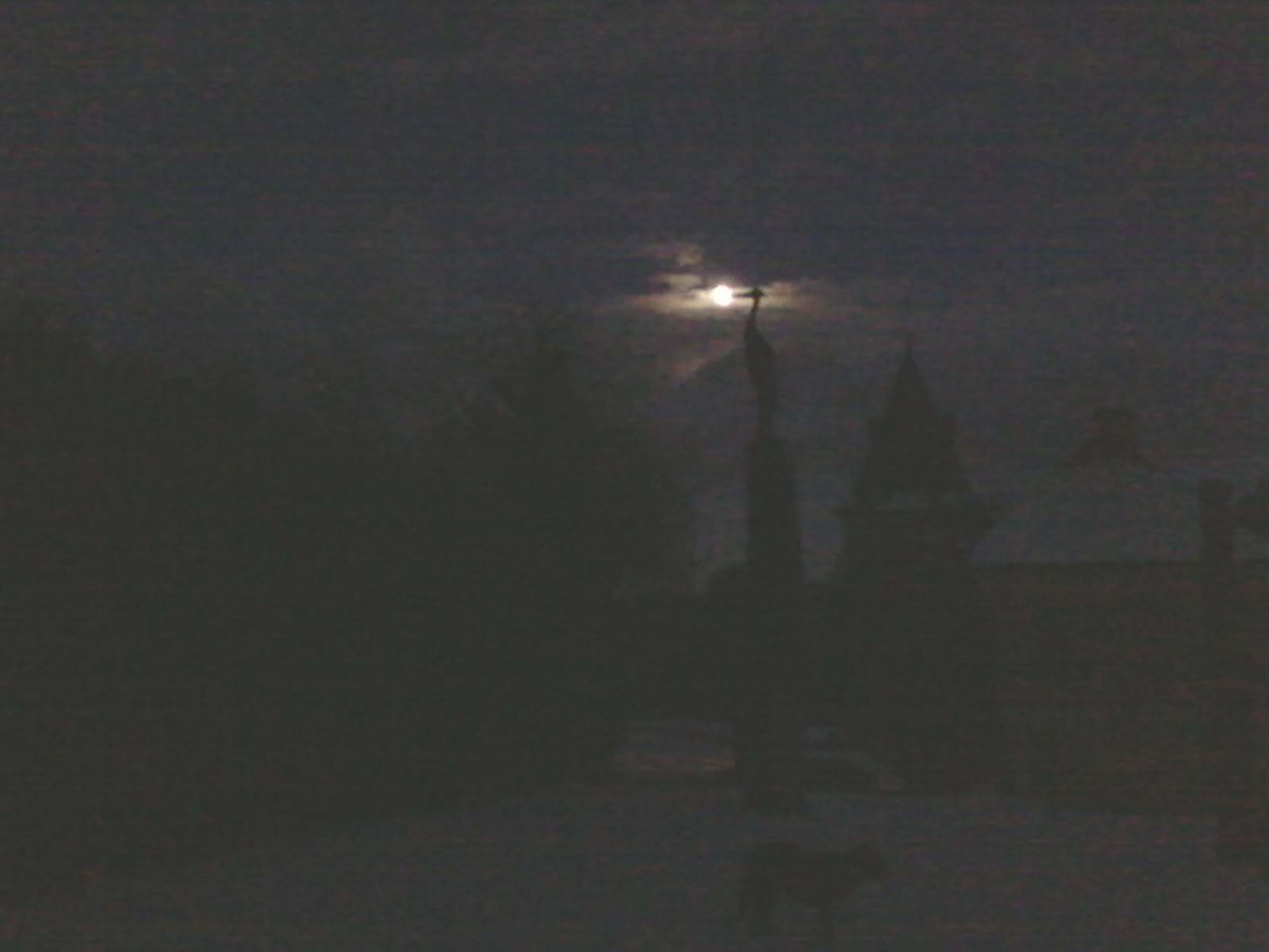 héron lune